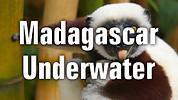 Madagascar Underwater