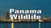 Panama Wildlife