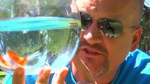 Achterbahn - oder die Grenzen eines Goldfischs