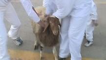 Samaritan Passover in Israel