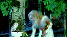 Secret Garden - Titkos kert