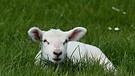 Siehe das ist das Lamm Gottes, welches der Welt Sünde trägt