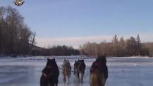 Chiens de Traineaux en Mongolie
