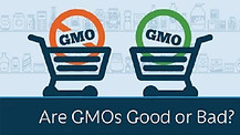 Are GMOs Good or Bad