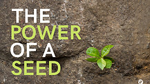 The Power Of A Seed - Part 1