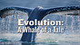 Evolution: A Whale of a Tale