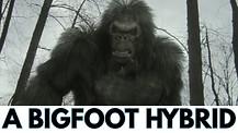 Bigfoot before the Flood. Rob Skiba Pt 2/2